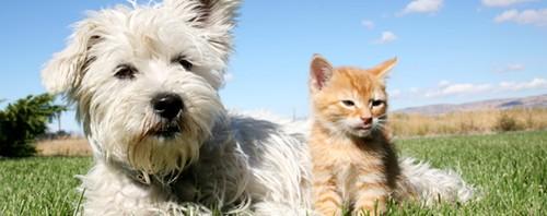 Warum Sollen Hunde Kein Katzenfutter Fressen Und Umgekehrt