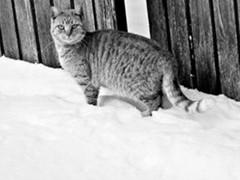 katzen wohlfühl temperatur